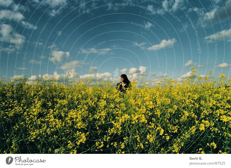 so far away Canola Yellow Dive Canola field Sky blue Clouds Bad weather Woman Long-haired Cardigan Green Summer disappear Human being joung miss Canopy (sky)