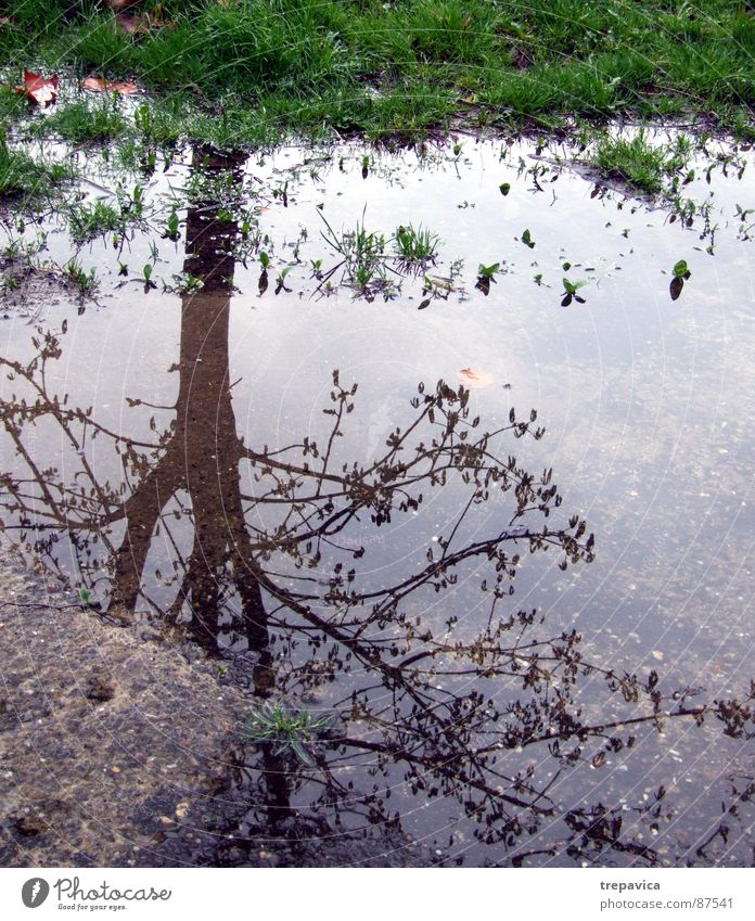 water and tree Tree Grass Mirror Asphalt Green Autumn Moody Wet Comfortless Spring 1 Rain Plant mood Twig leftover rain Weather reflection Street Floor covering