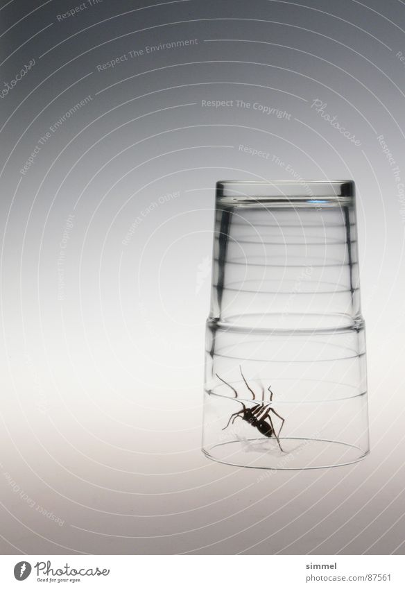 Glass prison I Spider Gray Disgust Threat Narrow Transparent Crawl Dangerous Animal Nightmare Beast Pester Sterile Panic Poison Disastrous Fear Transience