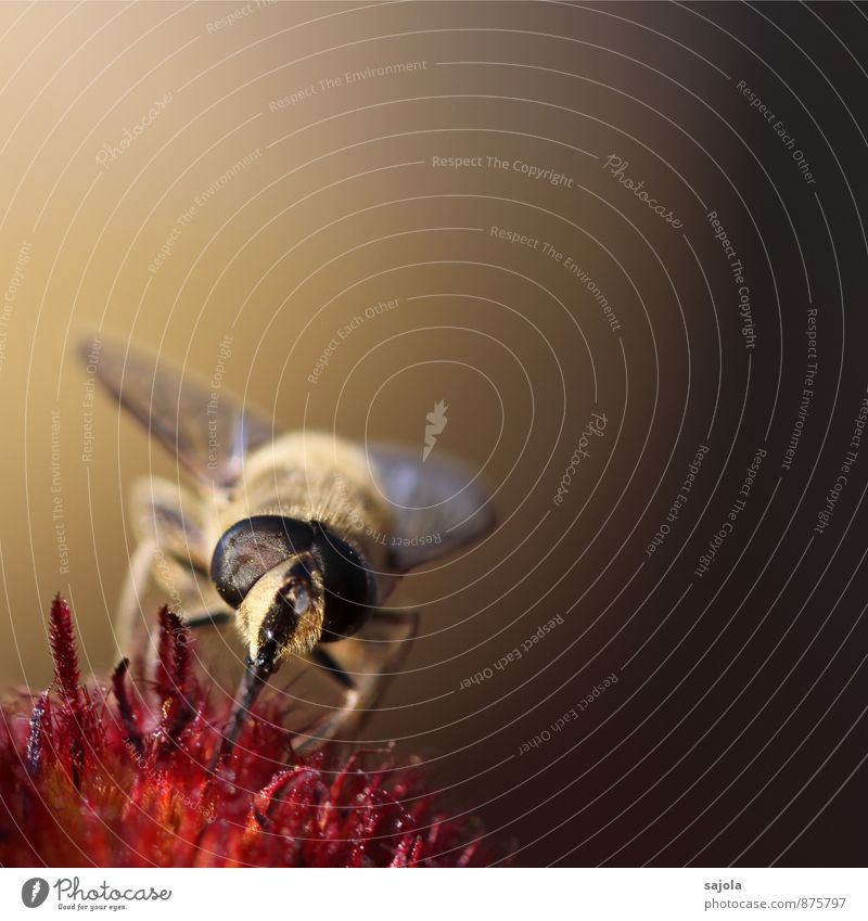 Nature Plant Animal Environment Blossom Wild animal Fly Insect Animal face To feed Suck Compound eye