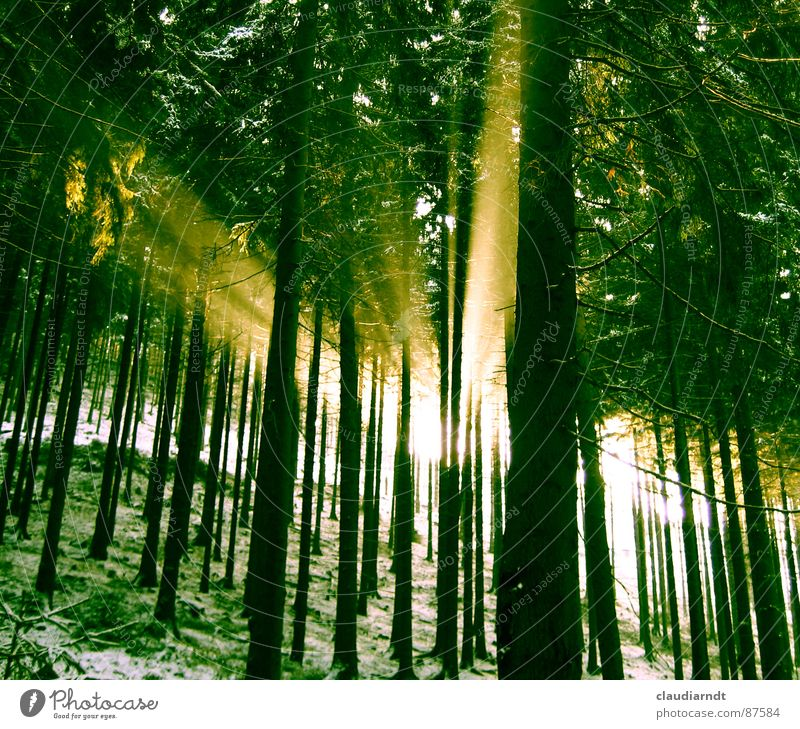 Nature Sun Green Forest Snow Mountain Spring Environment Hope Tree trunk Expectation Light Mystic Appearance Awareness Wonder