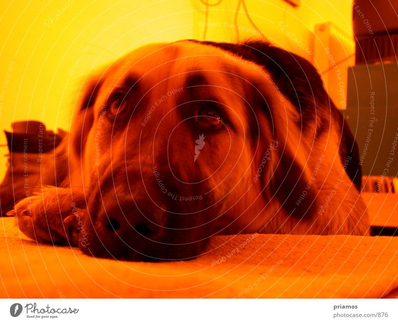 dog days Dog Animal Pet Snout Grief Photographic technology Looking Sadness