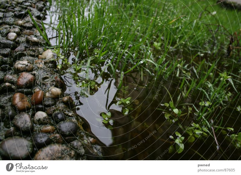 Water Green Grass Stone Rain Wet Lawn River Damp Brook Grassland Cast Pebble Knoll Reef Miniature