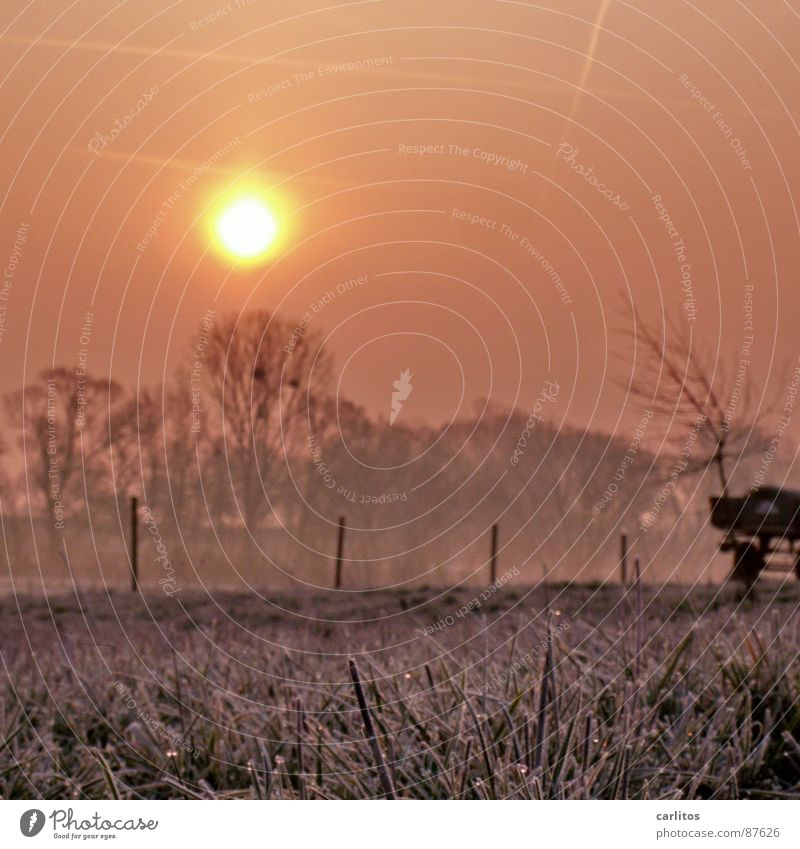 ground frost Freeze Dew Morning Sunrise Hoar frost Ground fog Meadow Fence Row of trees Diffuse Hope Occur Vague Grass Ambient Unclear Inaccurate Border