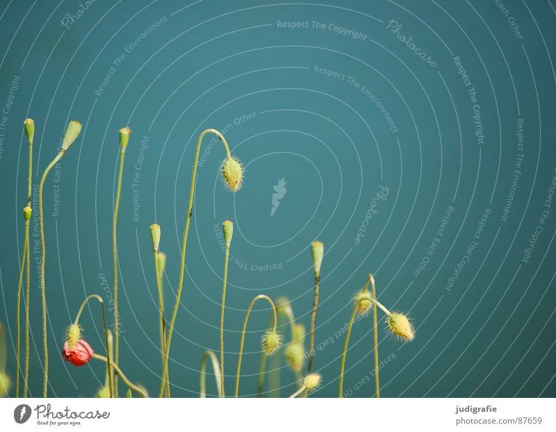 Nature Plant Green Summer Relaxation Calm Environment Meadow Lake Contentment Growth Multiple Stalk Harmonious Seed Bud