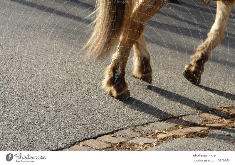 Animal Street Horse Asphalt Pelt Tails Hoof