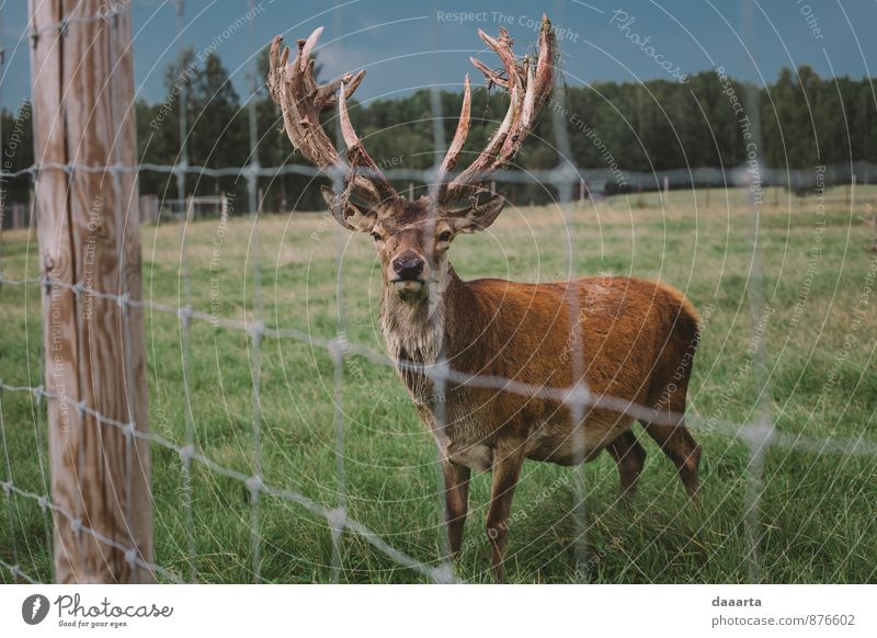 deer moments Nature Vacation & Travel Relaxation Animal Joy Forest Life Style Playing Lifestyle Freedom Design Park Tourism Wild Field