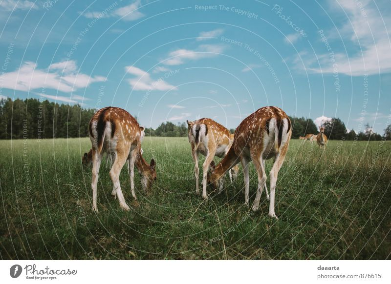 Feminine deers Sky Beautiful Summer Joy Animal Grass Happy Freedom Eating Healthy Exceptional Leisure and hobbies Lifestyle Wild animal Tourism Crazy