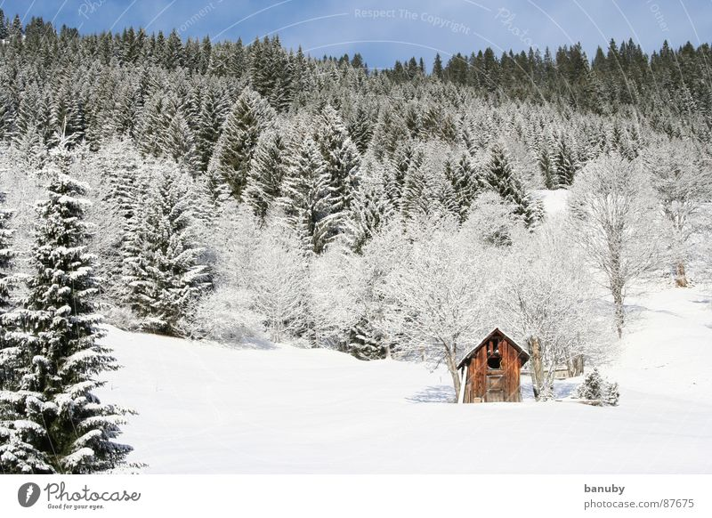 real winter Loneliness Cold Mountain Fir tree Farm Igloo Remote Withdraw Winter Snow Sky Hut Deserted