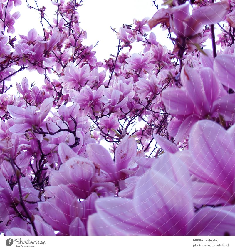 Beautiful White Sun Blossom Spring Happy Warmth Moody Pink Perspective Happiness Climate Physics Blossoming Square Ambient