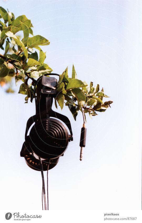 phone tree Headphones Green Leaf Black Glittering Spring Exterior shot Sky