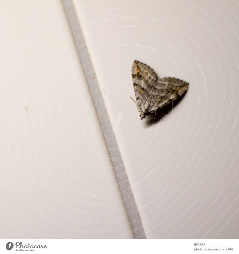 Butterfly on joint Animal Wing Brown Gray Seam Tile Wall (building) Sit grey-brown Small nocturnal Lost evaporated Captured Pattern Colour photo Subdued colour