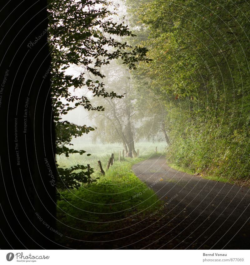 exit Environment Nature Landscape Plant Tree Grass Bushes Field Forest Dark Brown Gray Green Black Moody Arch Curve Vantage point Shroud of fog Haze