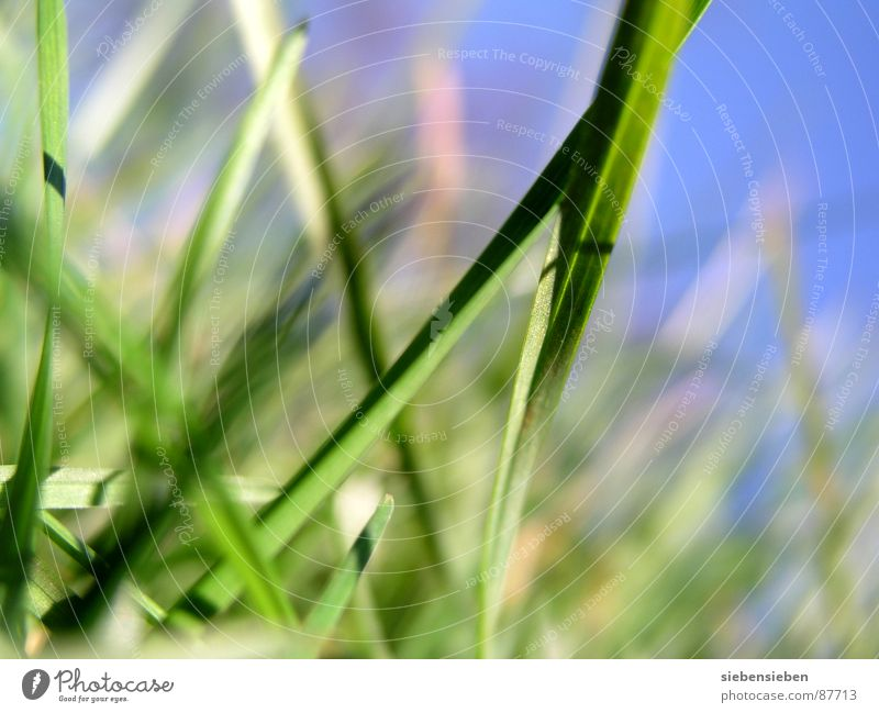 GNILH HÜRF Grass Green Growth Meadow Blade of grass Blossoming Seasons Summer Spring Close-up Force Perspective Natural phenomenon Knoll Holiday season