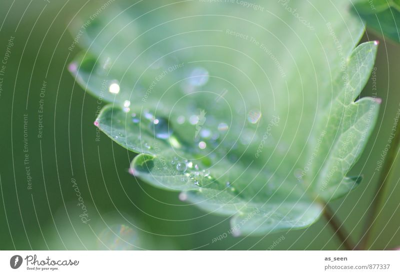 Nature Plant Beautiful Green Water Summer Leaf Environment Life Healthy Garden Glittering Rain Growth Elegant Esthetic