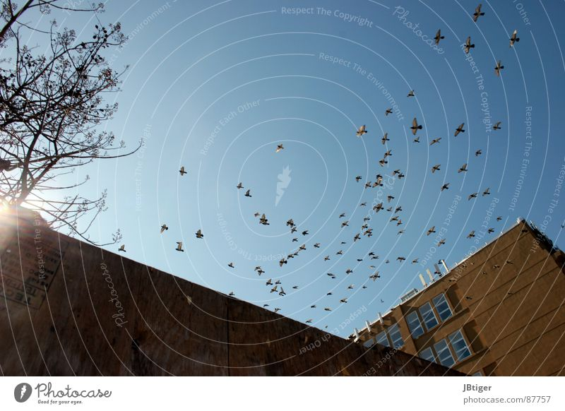 Joy Freedom Graffiti Warmth Air Bird Flying Level Factory Wing Blue sky