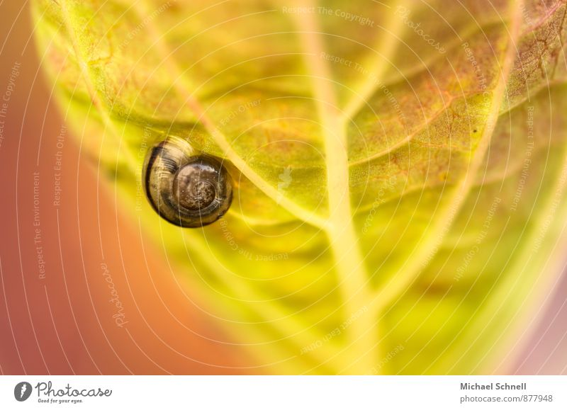 Nature Green Calm Animal Environment Yellow Natural Small Garden Brown Snail Crawl Willpower Slowly Snail shell Voluptuousness