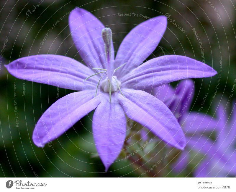 Flower Blossom Near Violet