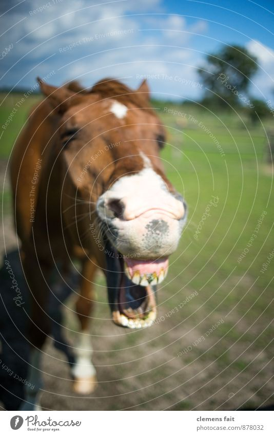 Laughed today? Horse Set of teeth Horse's bite Pasture Laughter Whinny Mouth Head Horse's head Chew Gum