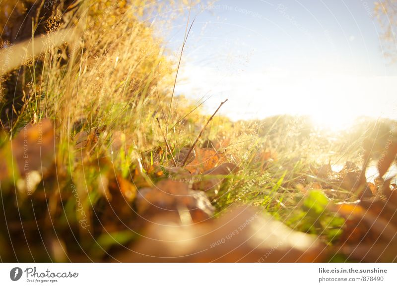 Hedgehog view Environment Nature Landscape Autumnal Leaf Autumn leaves Colour photo