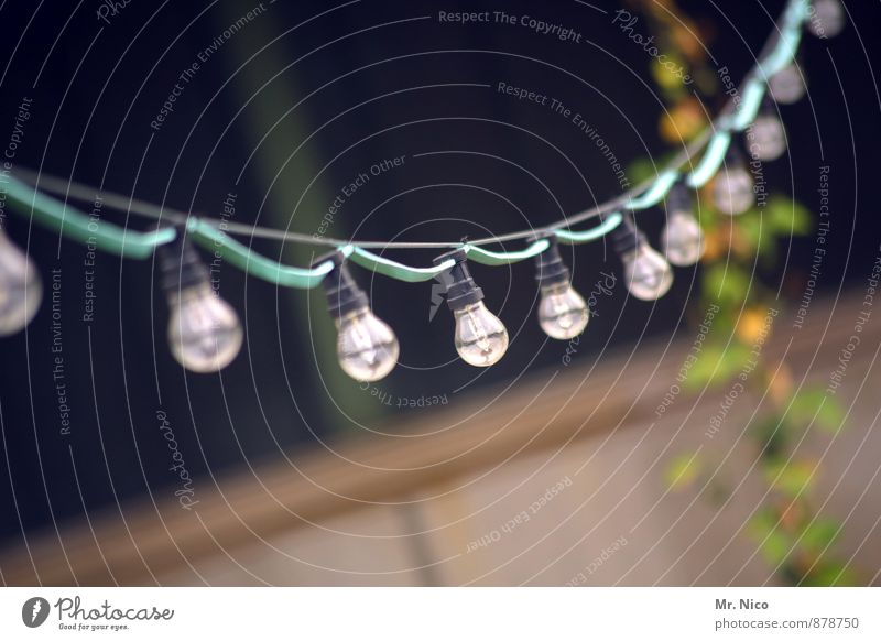 Cologne Lights | UT Cologne Summer Garden Party Event Plant Hang Lamp Electric bulb Fairy lights Lighting Cable Garden festival Electricity Beaded Row