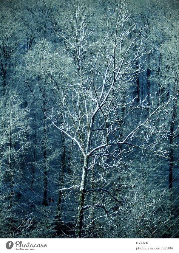 caught cold Hail Forest Hoar frost Wood Snowscape Fairy tale Sugar Sweet Tree trunk Clump of trees Stuttgart Snowstorm Winter saccharified fairyland