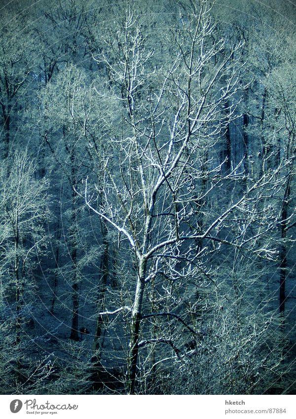 Winter Forest Snow Wood Sweet Branch Tree trunk Fairy tale Sugar Snowscape Stuttgart Hoar frost Elf Jinxed Snowstorm