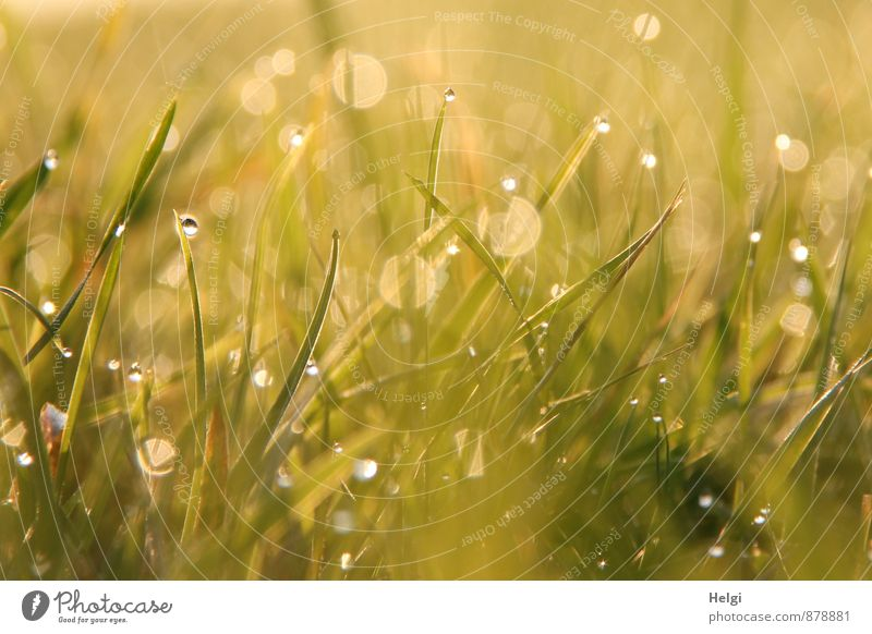 Nature Plant Green White Summer Calm Cold Environment Yellow Life Meadow Grass Small Exceptional Moody Glittering