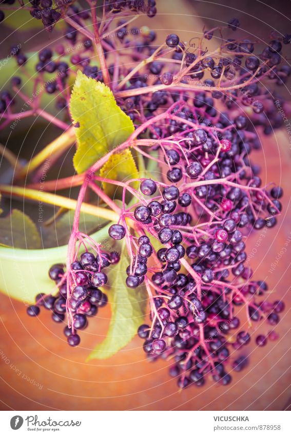 Elder branch with berries, toning Fruit Nutrition Organic produce Lifestyle Leisure and hobbies Summer Garden Nature Plant Autumn Agricultural crop Yellow white