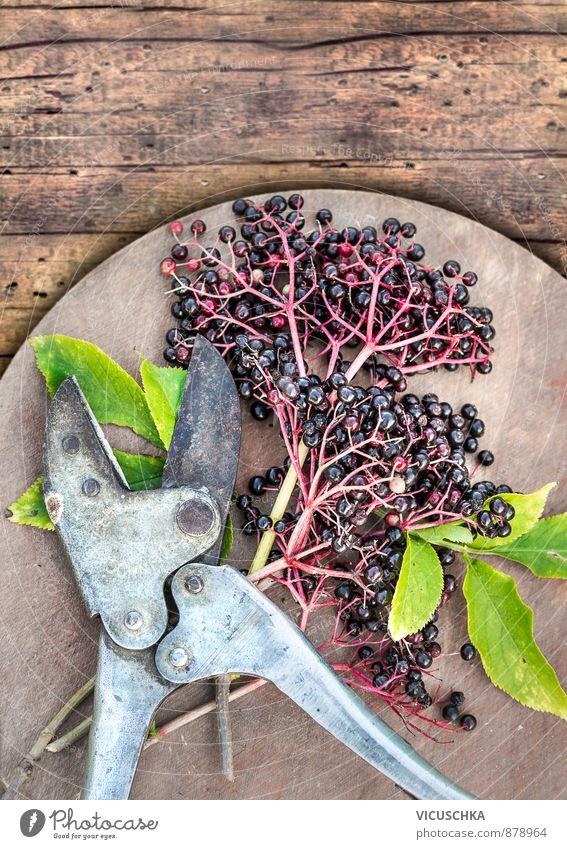 Elderberry berries with leaves and vintage pruning shears Food Fruit Organic produce Vegetarian diet Diet Lifestyle Design Leisure and hobbies Summer Garden