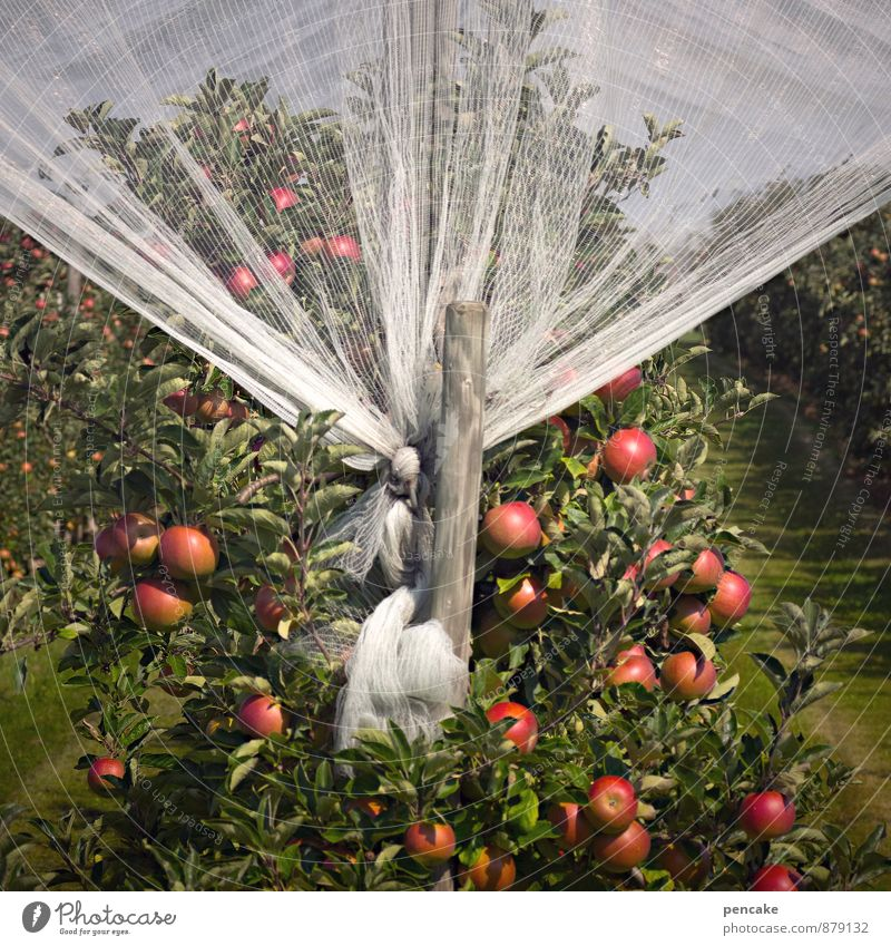 Nature Tree Red Autumn Food Growth Future Safety Net Harvest Apple Fragrance Sustainability Luxury Curtain Senses