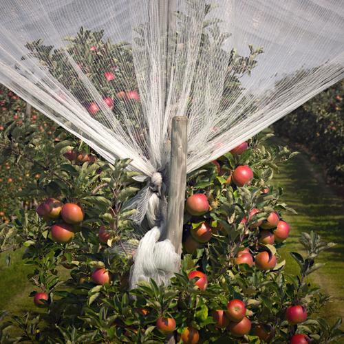 Nature Tree Red Autumn Food Growth Future Safety Net Harvest Apple Fragrance Sustainability Luxury Curtain Senses