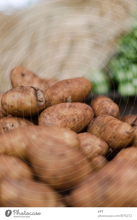 fresh potatoes Food Vegetable Potatoes Nutrition Organic produce Vegetarian diet Nature Dirty Authentic Exotic Healthy Delicious Round Brown Crisps French fries