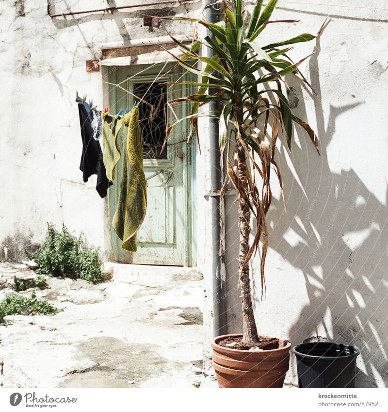 Greek flax Crete Clothesline Greece Palm tree Laundry Holder Pot Dry Hang up Plant Door Entrance Hot Beautiful weather Vacation & Travel Darken Household Shadow