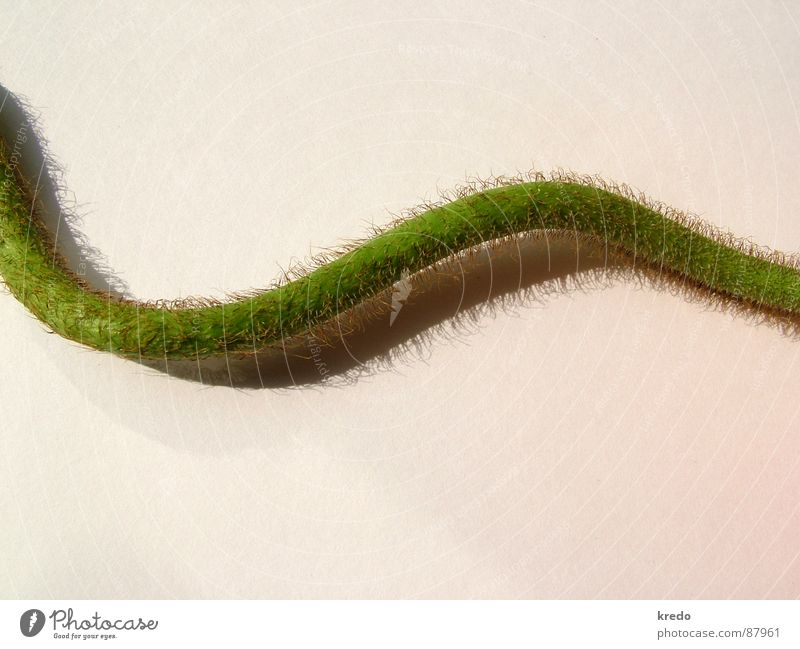 Nature Green Plant Environment Delicate Stalk Creativity Curve Botany Smooth Crawl Bend Arch Caresses Accuracy