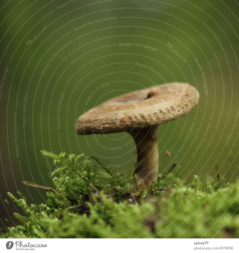 Brown in the green Nature Plant Earth Autumn Moss Wild plant Mushroom Mushroom cap Forest Stand Growth Thin Healthy Small Delicious Natural Soft Green