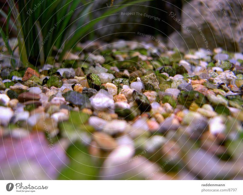 aquarium floor Aquarium Pebble Water Underwater photo Stone
