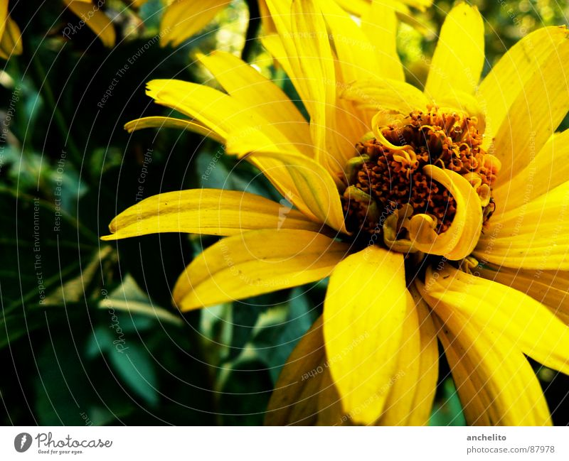Nature Flower Green Black Yellow Emotions Blossom Spring Background picture Environment Energy industry Blossoming Dynamics Tension Pollen Stamen