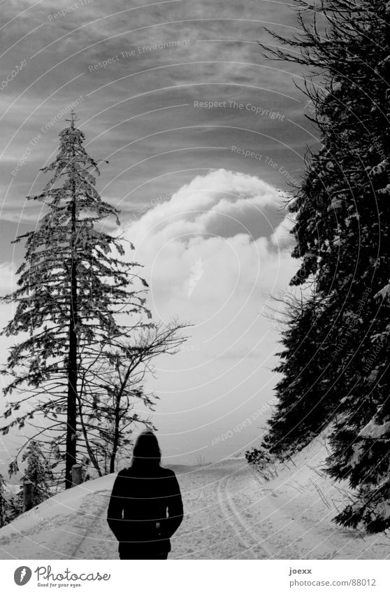 Woman Sky Nature Winter Loneliness Clouds Calm Forest Far-off places Snow Think Going Fear Walking To go for a walk Clarity