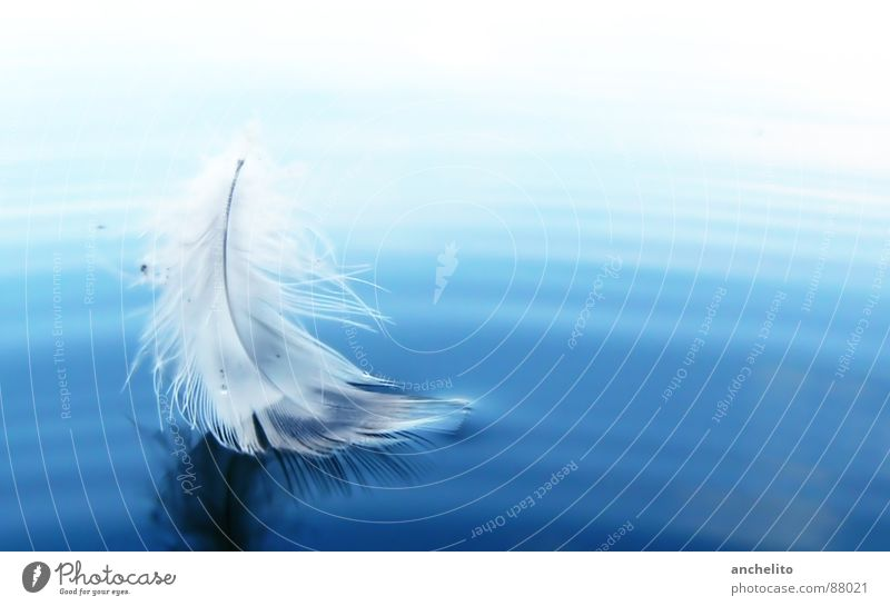 as light as a feather Lake Ocean Easy Light Soft Sailing Calm Peace Water Bird feathery the lightness of being Feather sea blue white swimming Smooth sail