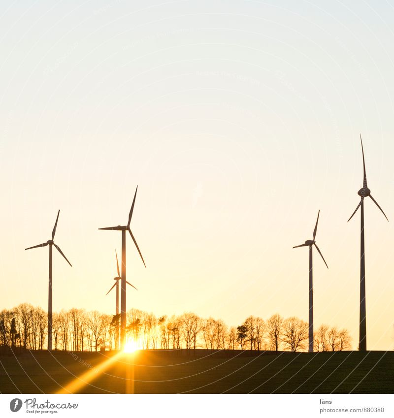 and cut Sun Energy industry Wind energy plant Sky Cloudless sky Sunrise Sunset Sunlight Spring Autumn Winter Beautiful weather Tree Field Movement Together