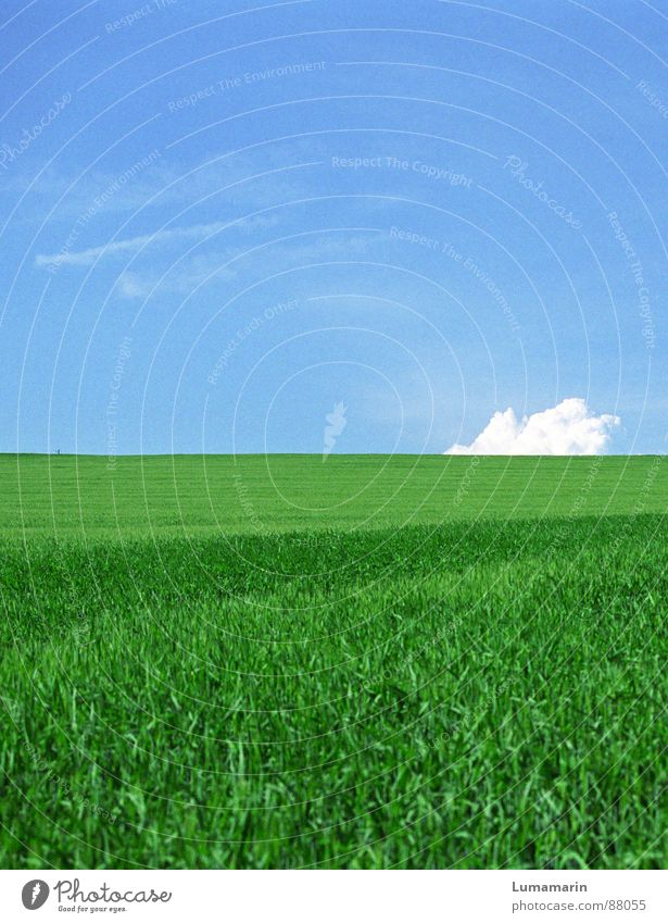 Sky Nature Summer Clouds Meadow Grass Field Horizon Earth Exceptional Curiosity Obscure Strange Blue sky Crash Orientation