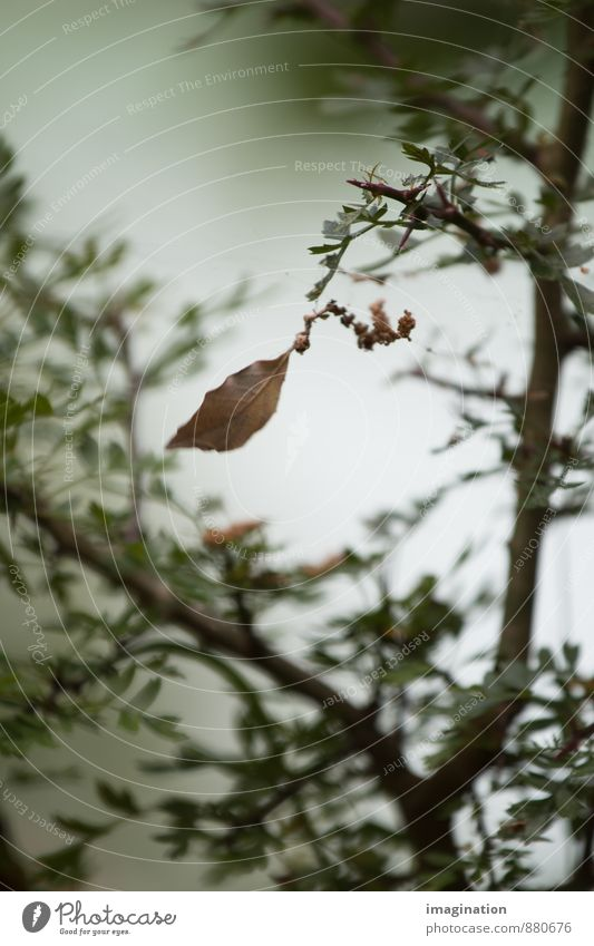 Of becoming and passing away Nature Plant Autumn Tree Leaf Old Uniqueness Brown Green Acceptance Serene Grief Death Pain Longing Loneliness Senior citizen End