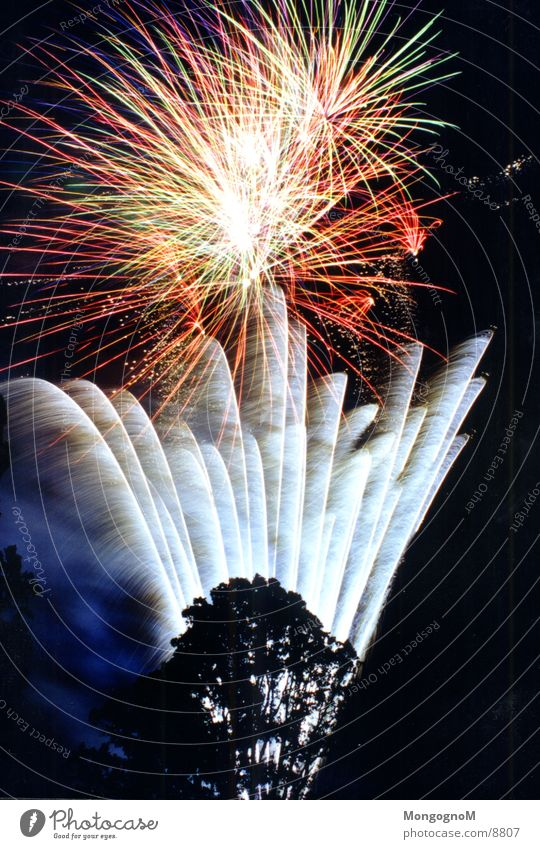 Fireworks3 Night Multicoloured Red Yellow Tree Photographic technology Firecracker Bright Spark