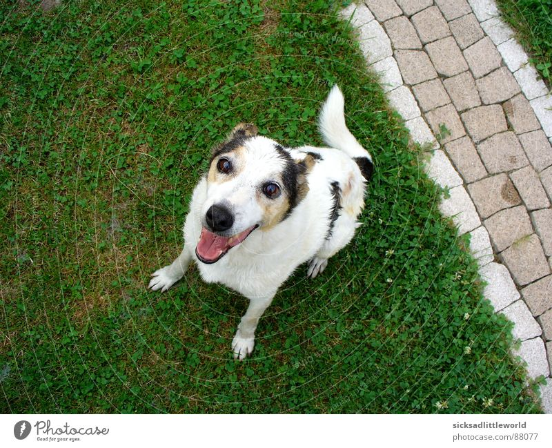 Hello! Joy Summer Garden Animal Grass Meadow Pet Dog 1 Playing Wait Happiness Happy Curiosity Cute Emotions Joie de vivre (Vitality) Anticipation Enthusiasm
