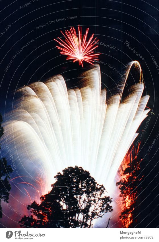 Fireworks2 Night Multicoloured Red Tree Photographic technology Firecracker Bright Spark
