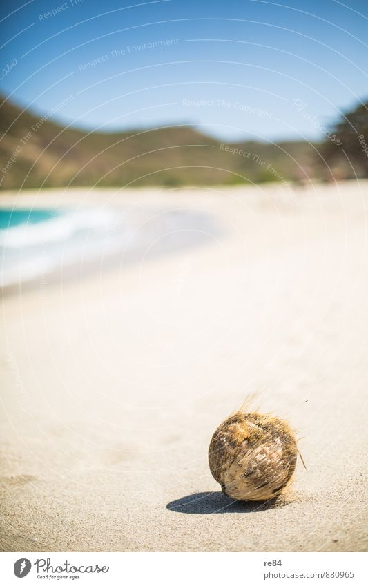 Who stole the coconut? Coconut Coconut drink Nutrition Vacation & Travel Summer Freedom Ease Senses Beach Indonesia Sandy beach Grain of sand Thread