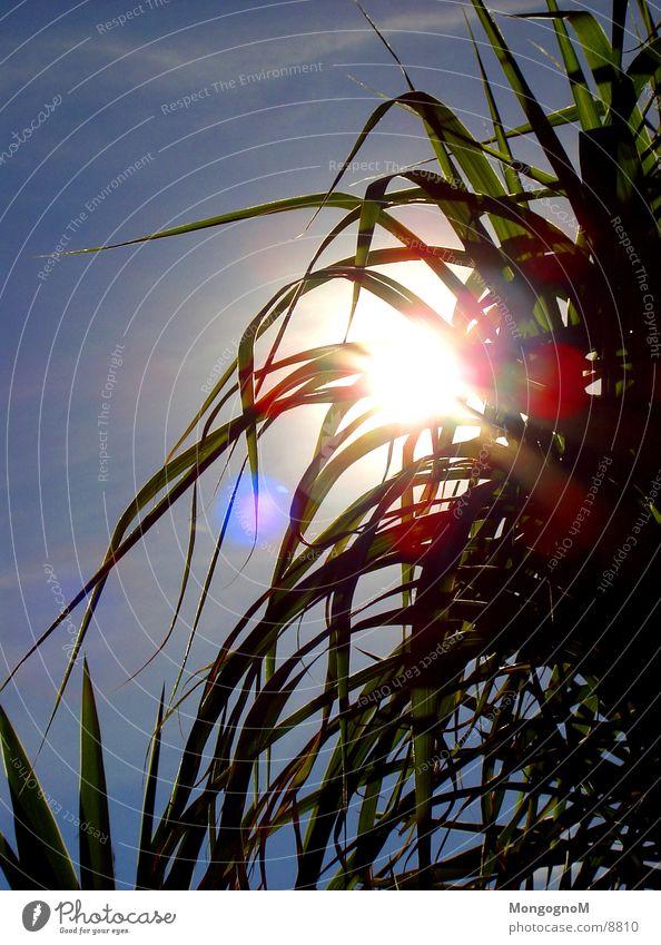 Sky Sun Green Blue Bright Dazzle Bamboo stick
