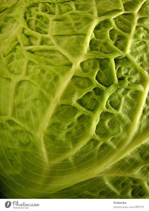 Nature Nutrition Line Near Vegetable Wrinkles Interlaced Sharp-edged Verdant Branched Crunchy Vegetarian diet Cabbage Cabbage Savoy cabbage