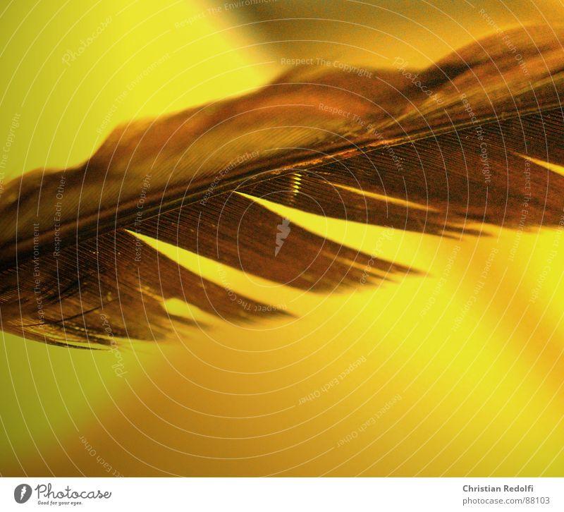 Beautiful Yellow Bird Brown Feather Broken Hover Ease Furrow Delicate Disk
